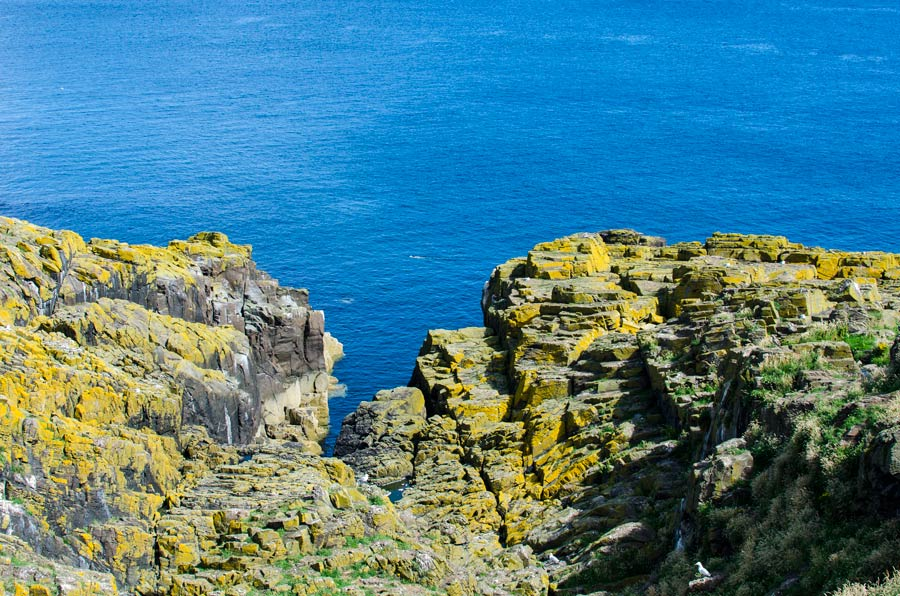 Lichen-covered rocks on the north side of the Isle of May