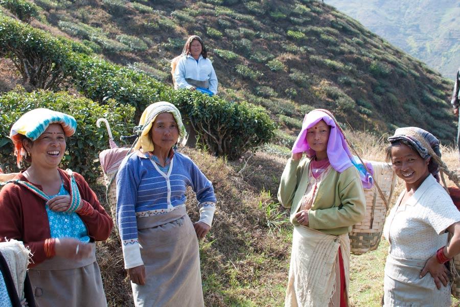 Tea pickers on the slopes below Darjeeling