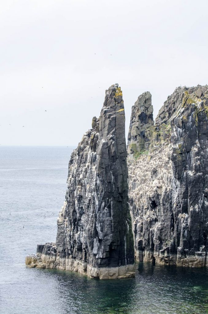The northern side of the Isle Of May